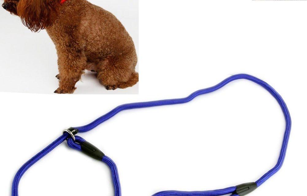 Cum Alegi Cele Mai Bune Lese și Zgărzi de Câini? Ham sau Zgardă?