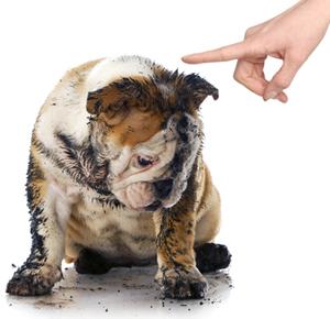 10 Soluții la Problemele de Comportament și Dresaj Canin